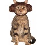 Coiffure princesse Leia pour chat